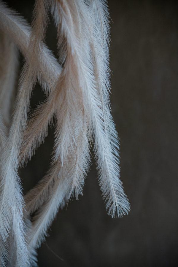 Feather feature - Signature Rentals